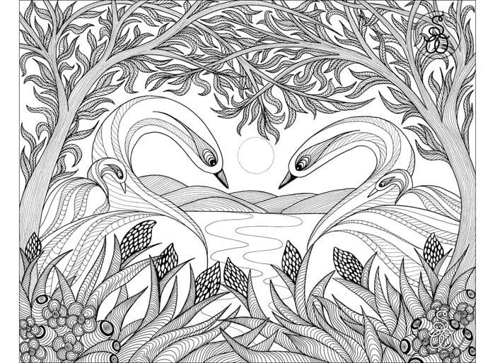 swans2w